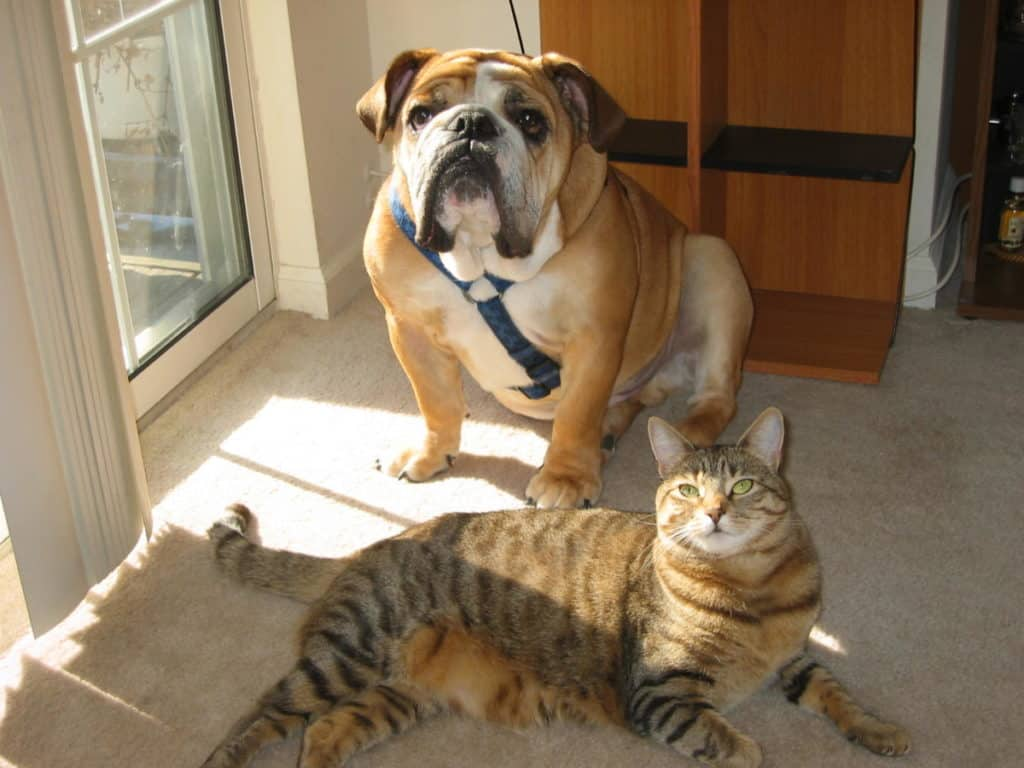 A dog and cat hanging out